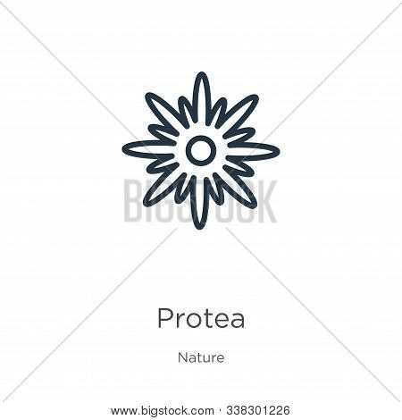 Protea Icon. Thin Linear Protea Outline Icon Isolated On White Background From Nature Collection. Li