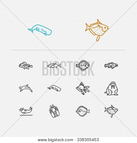 Seafood Icons Set. Spiny Lobster And Seafood Icons With Turbot, Walrus And Goldfish. Set Of Fighting
