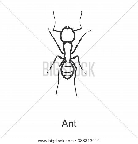 Ant Vector Icon.line Vector Icon Isolated On White Background Ant.