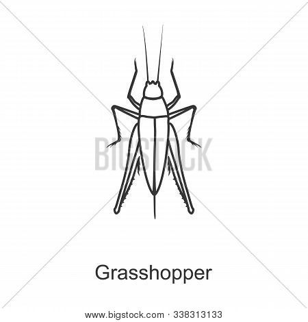 Grasshopper Vector Icon.line Vector Icon Isolated On White Background Grasshopper .