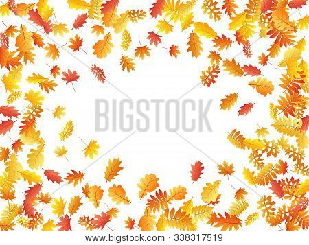 Oak, Maple, Wild Ash Rowan Leaves Vector, Autumn Foliage On White Background. Red Orange Gold Wild A