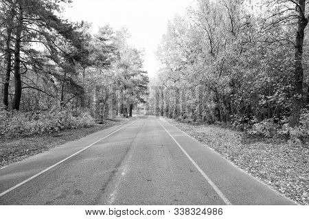 Autumn Is All Around Us. Road Through Autumn Forest. Desolate Road On Natural Landscape. Asphalt Roa