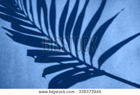 Classic Blue 2020 Year  Color Tropical Plant Textured Background.