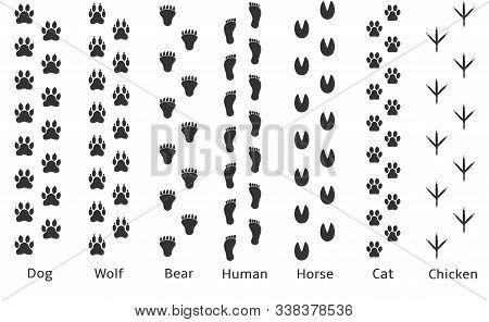 Paw Print Icon. Dog Wolf Bear Human Horse Cat Chicken Prints
