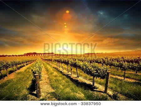 Beautiful Sunset over a Barossa Vineyard