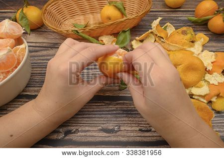 The Girls Hands Are Cleaning Tangerine, Tangerines On A Twig With Green Leaves, Peeled Tangerines In