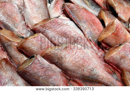 Sea Perch - Headless Fish For Sale At The Market, Raw Fresh Fish With Red Scales