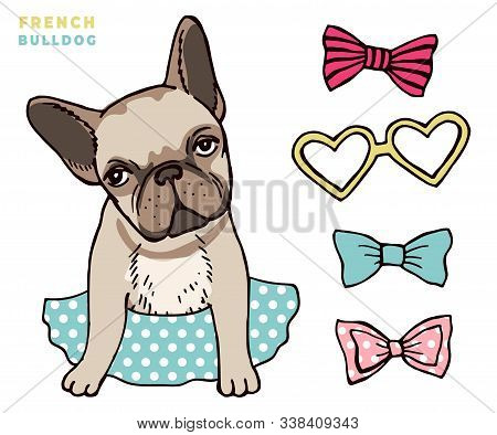 French Bulldog. Cute Puppy Bulldog With Accessorises. Dress Up Your Dog Vector Illlustration. Bulldo