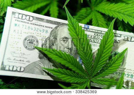 Revenues In The Marijuana Industry And The Medical Industry. American Dollar Bill On Cannabis Leaves