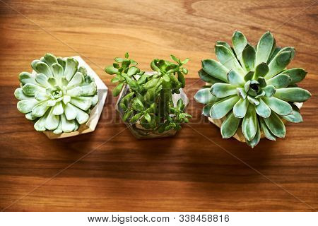 Three House Plants In Flower Pots On Wooden Table Background, Close-up