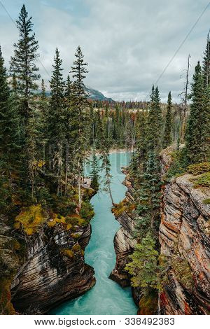 Beautiful Canyon Walls With Towering Pine Trees Off The Athabasca River In Jasper National Park, Alb