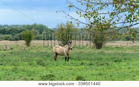A Workhorse Grazes In A Meadow On A Summer Day.
