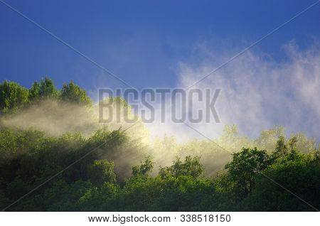 Mist Rises Over The Forest After The Rain