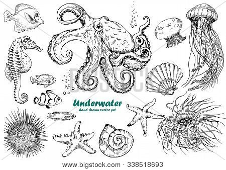 Set Of Underwater Creatures, Octopus, Jellyfish, Starfish, Seahorse, Sea Urchin, Shells And Tropical