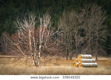 Winter Hay Bales. Hay Is Stacked And Stored For The Winter In The Nicola Valley Of British Columbia.