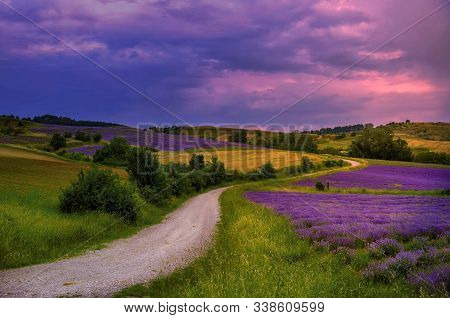 Lavender Field In The Countryside In The Evening.