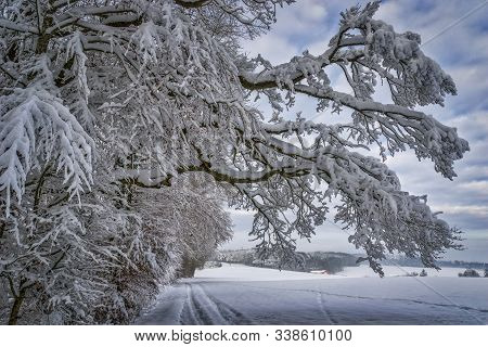 Winter Landscape Of The Countryside. Picturesque Trail With Snow-covered Trees.