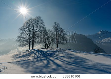 Snow-covered Trees On A Winter Alpine Landscape. Schwyz, Switzerland.