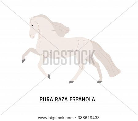 Pura Raza Espanola Flat Vector Illustration. Thoroughbred Spanish Horse, Andalusian Equine, Pedigree