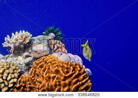 Close Up Underwater View Of Coral Reefs And Small Colorful Fishes, With Blue Water Background, Copy