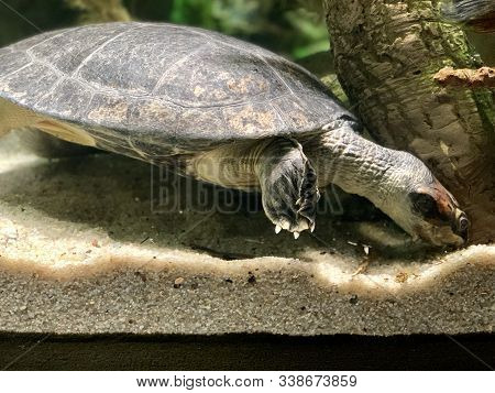 Single Sea Turtle In Water Close Up