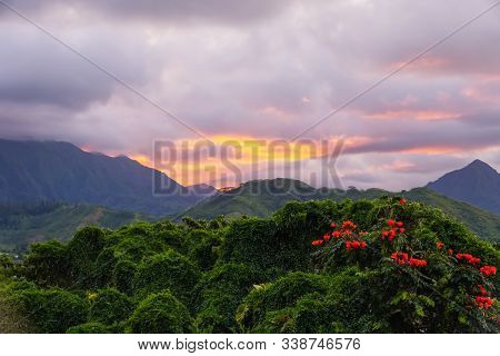 The Plants, Vines, And Flowers Of The Hawaiian Rainforest Glow In The Sunset Light. The Koolau Mount