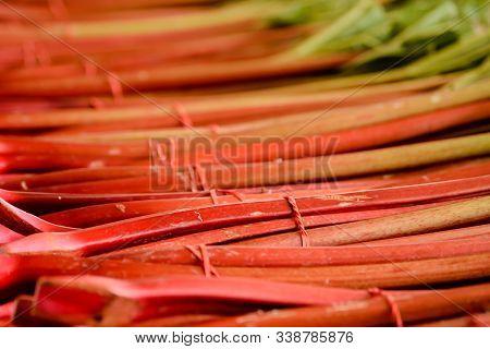 Bundled Red, Ripe Rhubarb Stalks At A Farmers Market