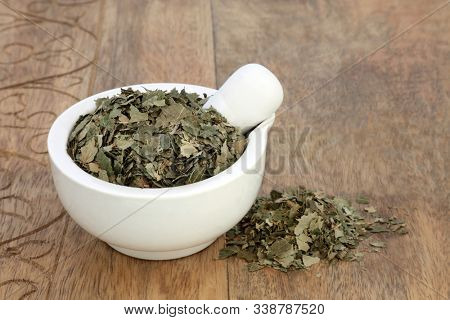 Birch leaves herb used in herbal medicine to treat kidney and liver functions, eliminates toxins from the body, strengthens the immune system, lowers cholesterol & assists in weight loss. Betual alba. poster