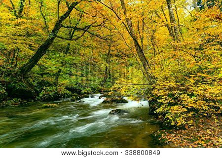 Beautiful View Of Oirase River Flow Passing Green Mossy Rocks In The Colorful Foliage Forest Of Autu
