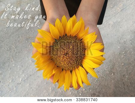 Inspirational Motivational Quote - Stay Kind. It Makes You Beautiful. With Background Of Sunflower B