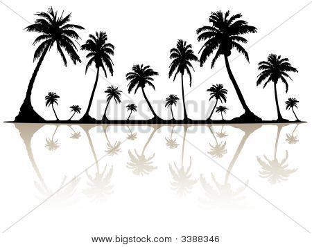 Palmsilhouette