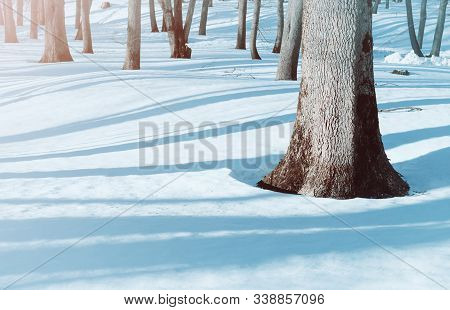 Winter holidaylandscape, snowy winter trees and snowdrifts in the forest. Winter holiday snowy morning scene. Colorful holiday winter background