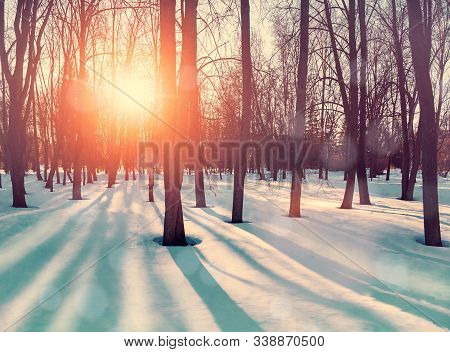 Winter forest landscape with snowy forest winter trees and snowfall in the park. City winter forest landscape scene, winter snowy sunset forest in warm vintage tones