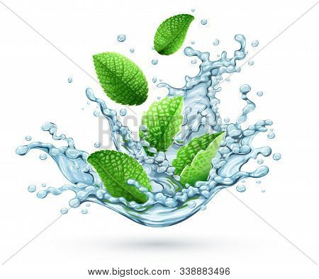 Realistic Vector Water Splash With Green Peppermint Leaves Falling Down. Fresh Cool Herbal Drink Wit