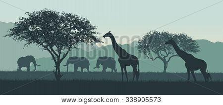 Realistic Illustration Of African Landscape And Safari. Elephant With Giraffe On Savanna Among Trees