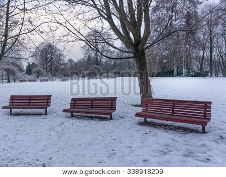Three Empty Red Benches In A Winter Park. Free Space. A Gloomy Winter Day Without Sun. Wistful Weath