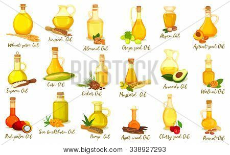 Set Of Isolated Nut Oil Bottles. Drink And Body Care, Medicine Product. Grape And Argan, Wheat And A