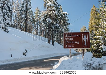 Sign To Sherman Tree In Sequoia National Park. Winter Landscape With Snow And Forest In Sequoia Nati