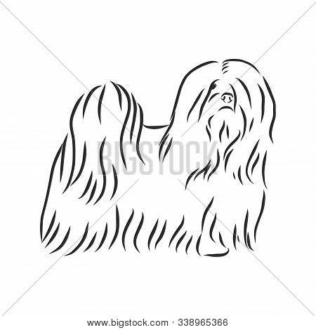 Vector Illustration. Illustration Shows A Dog Breed Lhasa Apso
