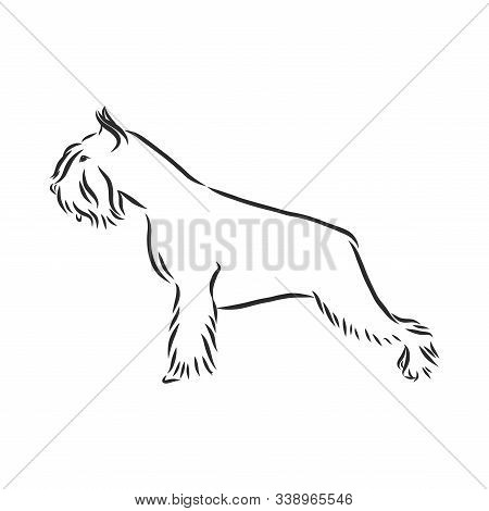 Decorative Portrait Of Standing In Profile Dog Miniature Schnauzer, Vector Isolated Illustration In