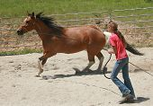 cowgirl lunging her horse as regular part of training poster