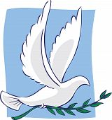 A white dove of peace flying with an olive branch in it's feet. poster