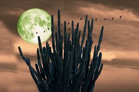Full Cold Moon On Night Sky And White Cloud And Silhouette Cactus And Birds Flying