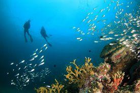 Couple scuba dive underwater coral reef