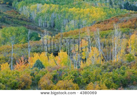 Colorado Aspens Dallas Divide
