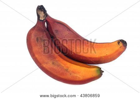 Red Caribe Bananas