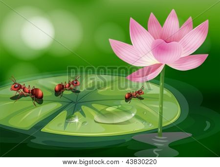 Illustration of the three ants above the waterlily plant