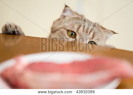 Cat trying to steal food from kitchen table