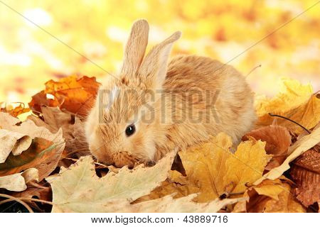 Fluffy foxy rabbit on leaves in park poster