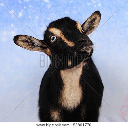 Christmas Goat